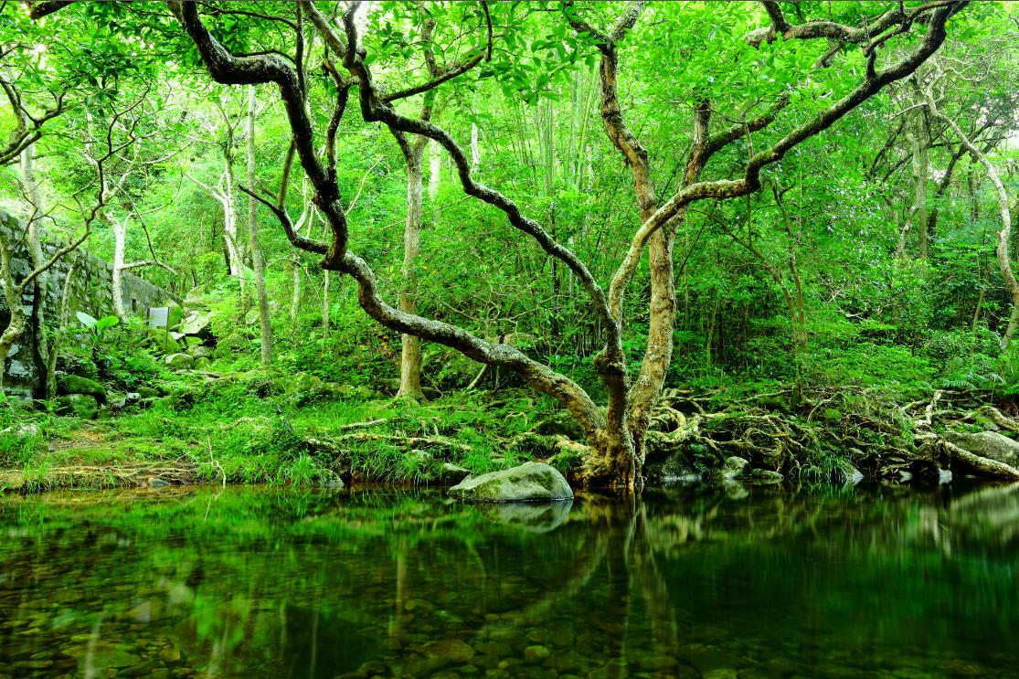 Forest header image