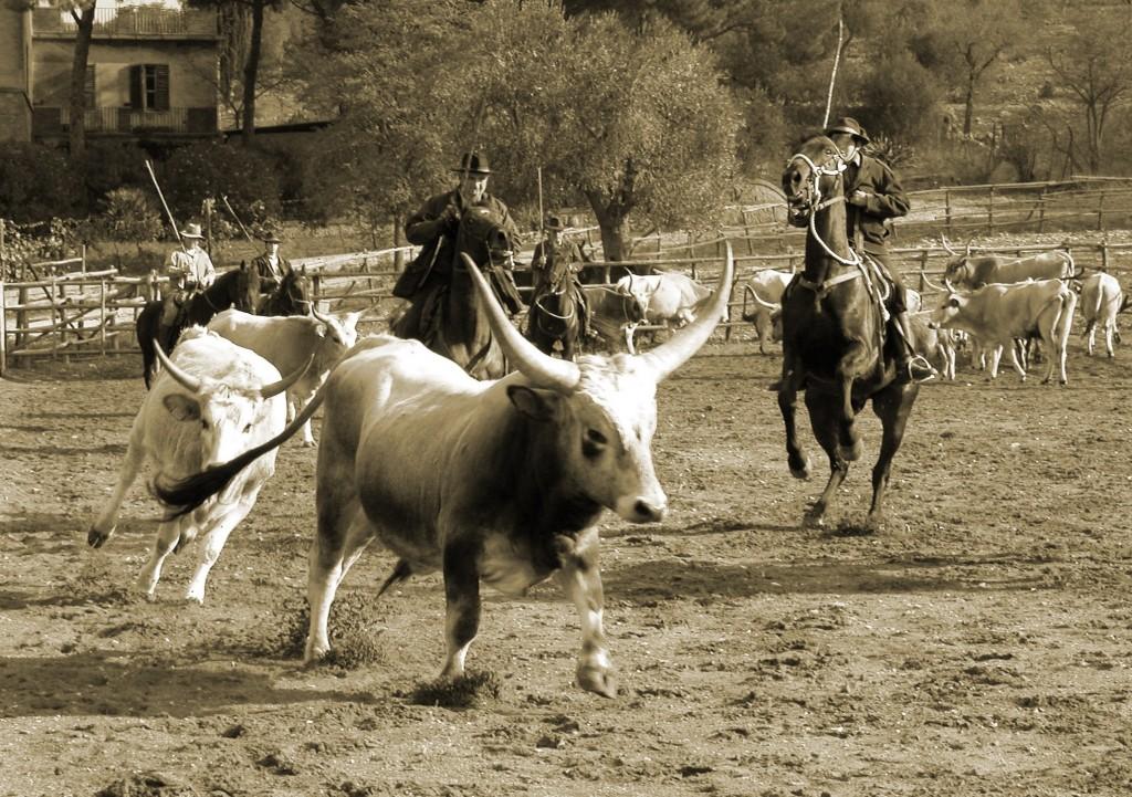 buttero.italian.cowboy-1024x721